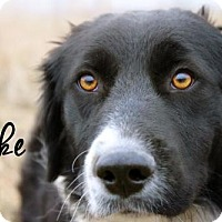 Adopt A Pet :: Jake - Joliet, IL