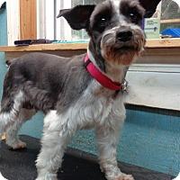Adopt A Pet :: Sandie - Crump, TN
