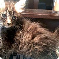 Adopt A Pet :: Flufferbutt - Williston Park, NY
