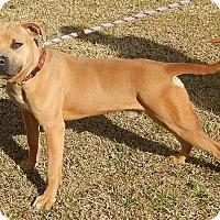 Adopt A Pet :: Saber - Newport, NC