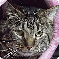 Adopt A Pet :: Jimmy - Colorado Springs, CO