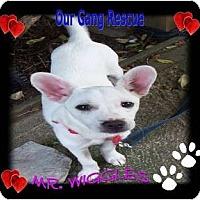 Adopt A Pet :: Mr. Wiggles - Cincinnati, OH