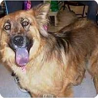Adopt A Pet :: Girlie - Scottsdale, AZ