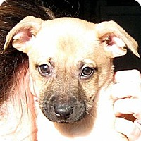 Adopt A Pet :: Baby Holly - Oakley, CA