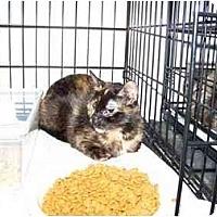 Adopt A Pet :: Mystic - Syracuse, NY