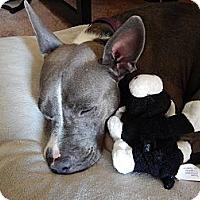 Adopt A Pet :: Gwen - San Diego, CA