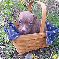 Adopt A Pet :: Male # 1 - Roaring Spring, PA