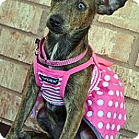 Adopt A Pet :: Jade-Adoption pending - Bridgeton, MO