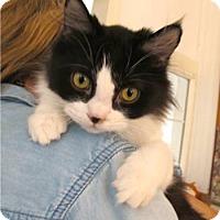 Adopt A Pet :: Mabel - Davis, CA