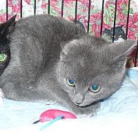 Adopt A Pet :: Nicole - Colmar, PA