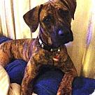 Adopt A Pet :: Meara