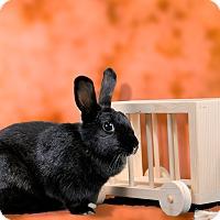 Adopt A Pet :: Waverly - Marietta, GA