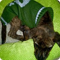 Adopt A Pet :: MISO - EDEN PRAIRIE, MN