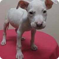 Adopt A Pet :: Tina - Gary, IN