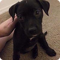 Adopt A Pet :: Nana - Gainesville, FL