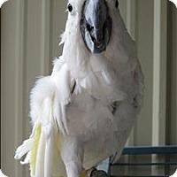 Adopt A Pet :: Hannigan - Denver, CO