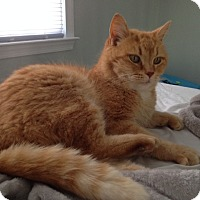 Adopt A Pet :: Big Mac - Richmond, VA