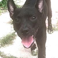 Adopt A Pet :: Lyla - St Petersburg, FL