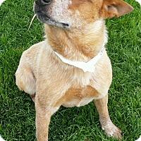 Adopt A Pet :: Zack - Corrales, NM