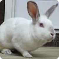 Adopt A Pet :: Flip - Edmonton, AB