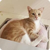 Adopt A Pet :: Nilla - Homestead, FL