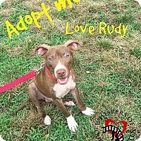 Adopt A Pet :: Rudy - South Mills, NC