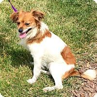 Adopt A Pet :: Nudder Budder - Oswego, IL