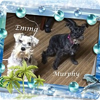 Adopt A Pet :: Emma & Murphy - Crowley, LA