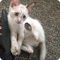 Adopt A Pet :: Chickie - Philadelphia, PA