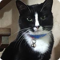 Adopt A Pet :: Anja - Witter, AR