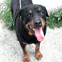Adopt A Pet :: Keyira - Frederick, PA