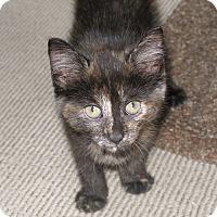 Adopt A Pet :: Kajol - Covington, KY