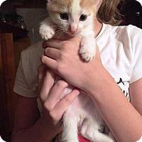 Adopt A Pet :: Sonnu - Putnam, CT