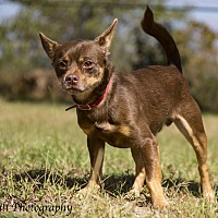 Adopt A Pet :: Brownie - Warner Robins, GA