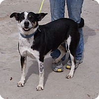 Adopt A Pet :: M Thelma - Lafayette, LA