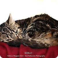 Adopt A Pet :: Shilo - Appleton, WI