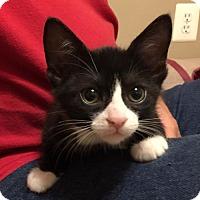 Adopt A Pet :: Skeeter - Herndon, VA