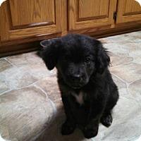 Adopt A Pet :: Mindy - Bernardston, MA