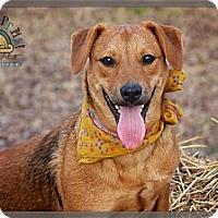 Adopt A Pet :: Kylie - Albany, NY