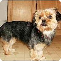 Adopt A Pet :: Kelsey - Mooy, AL