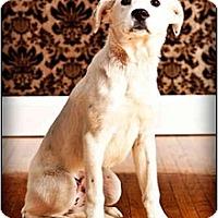 Adopt A Pet :: Arianna - Owensboro, KY