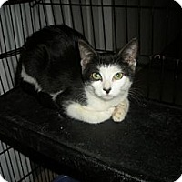 Adopt A Pet :: Eve - Bayonne, NJ