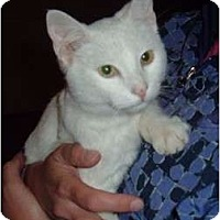 Adopt A Pet :: Frosty - Troy, OH
