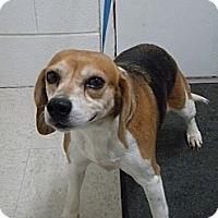 Adopt A Pet :: Livy - Lancaster, VA