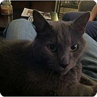 Adopt A Pet :: Cole - Narberth, PA