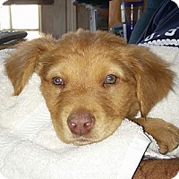 Adopt A Pet :: Davey - Golden Valley, AZ