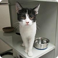 Adopt A Pet :: Petra - Gilbert, AZ