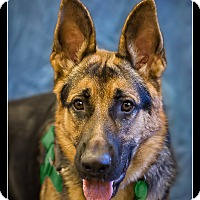 Adopt A Pet :: Trooper - Wickenburg, AZ