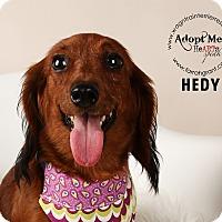 Adopt A Pet :: Hedy - Omaha, NE