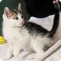 Adopt A Pet :: Nevis - Chattanooga, TN